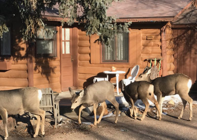 Redemption Cabin is an extraordinary vacation rental cabin near RMNP in Estes Park CO USA. This is an image of front door deer grazing.